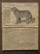 Catalogo Cani Chien Montagne Terranova Dogue Danois Bull Terriers Bassotti - Libri, Riviste, Fumetti