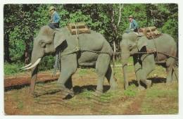 ELEPHANTS PREPARING FOR A PARADE IN THAILAND VIAGGIATA FP - Thailand