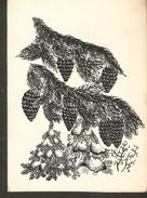 K. Sihouetee - Scissor-type - Christmas Tree Cone Pine Plant Illustration Hand Painted Split Postcard - Silhouette - Scissor-type