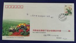 Pumpkin Cucumber Tomato Eggplant,China 2003 Sheqi Vegetable Planting Base Advertising Postal Stationery Envelope - Vegetables