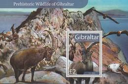 GIBRALTAR 2007 - BF81** Faune Préhistorique, Bouquetin - Gibraltar