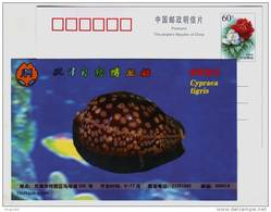 Cypraea Tigri,Tiger Cowrie Shell,seashell Conch,China 1999 Tianjin Nature Museum Advertising Pre-stamped Card - Coquillages
