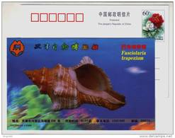 Fasciolaria Trapezium Trumpet Shell,seashell Conch,China 1999 Tianjin Nature Museum Advertising Pre-stamped Card - Coquillages