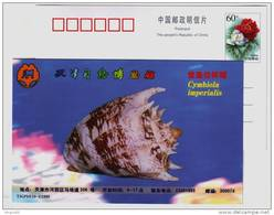 Cymbiola Imperialis Trumpet Shell,seashell Conch,China 1999 Tianjin Nature Museum Advertising Pre-stamped Card - Coquillages