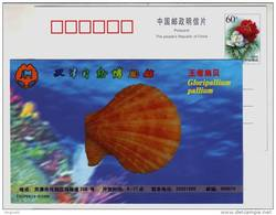 Gloripallium Pallium Scallop Shell,seashell Conch,China 1999 Tianjin Nature Museum Advertising Pre-stamped Card - Coneshells
