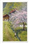 17147 -  Paysage Cerisier En Fleurs Et Enfant Au Bord De La Rivière Série 422 N° 5465 - Autres