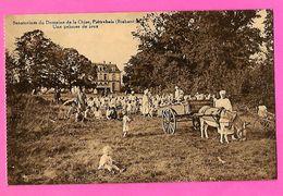 CPA -  PIETREBAIS  --  Sanatorium  Du  Domaine  De  La  Chise  --  Une  Pelouse  De  Jeux - Incourt