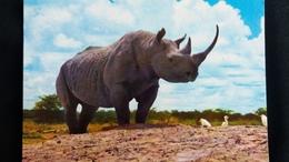 CPM AFRICAN WILD LIFE RHINOCEROS - Rhinocéros