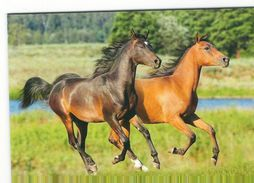 Chevaux 2015  Calendrier / Paarden 2015 Kalender - Calendriers