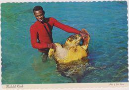 Commonwealth Des Bahamas,pays Anglophone,hawksbill Turtle,l´homme Et La Tortue,sauveteur,mer Des Caraibes,floride,cuba - Bahamas