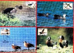 NAMIBIA, 2000, Maxi Cards, Ducks Of Namibia, MI Nr. 318-321, F3840 - Namibië (1990- ...)