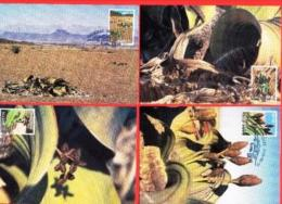 NAMIBIA, 2000, Maxi Cards, Welwitschia Mirabilis, MI Nr. 337-340, F3841 - Namibië (1990- ...)