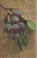 Fruit Fruits - 1906 - Botanik