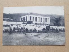Missiën Der Zusters Van BERLAAR ( Thill ) Eene Hoeve Te ARAGUARY Brazilië - Anno 19?? ( Zie Foto Voor Details ) !! - Berlaar