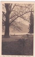 Lago Di Como - Cernobbio - Villa D'Este - Nel Parco (8162) - Como