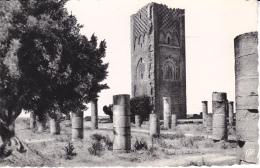 AFRIQUE  MAROC  RABAT   LA TOUR HASSAN - Rabat