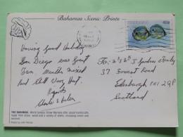 "Bahamas 1989 Postcard """"straw Market"""" To Scotland U.K. - Fishes - Bahamas (1973-...)"