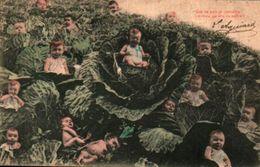 Bébés Multiples 222 Chou - Babies