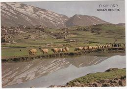 Golan Heights - The Druze Village Magdal Shams (Mt. Hermon) Village Des Druzes - Mountons/Sheep - (Israel) - Israël