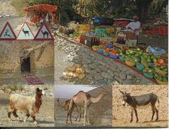 Oman - Farming - Oman