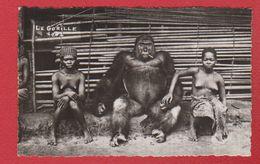 Carte   --  Gorille Avec Femmes Indigènes - Other