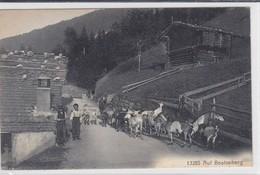 Beatenberg : Hirte Und Ziegenherd / Goats. Troupeau De Chèvres Et Chevriers - Animaux & Faune