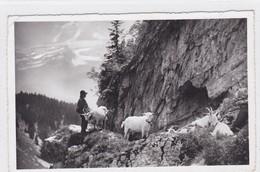 Leysin, Le Chevrier / Hirtenknabe / Goat Keeper - Animaux & Faune