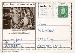 24155 Germany Stationery Card 1960 Circuled Showing Zoo Of Hannover, Monkeys  Affen Singes - Monkeys