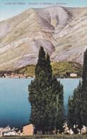 Lago Di Como - Dintorni Di Bellagio - Cipressi (47) - Como