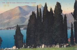 Lago Di Como - Dintorni Di Bellagio - Cipressi (5180) - Como