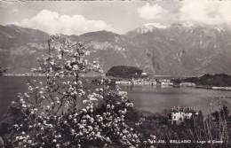 Lago Di Como - Bellagio (115-222) - Como