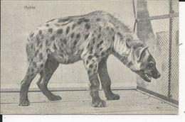 Hyene - Altri