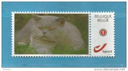 MIJNZEGEL BELGIUM  DIEREN  KAT CHAT CAT ** - A830 - SUPER SALE ...ZIE/VOIR SCAN...  .. - Bélgica