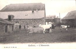 Gedinne - L'Abreuvoir (animée, Vaches, G H, 1906) - Gedinne