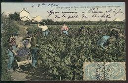 Les Grappes Et Les Coeurs Se Cueillent Aux Vendanges - Vignes