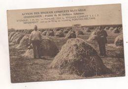 36293  -  Oeudeghien     Prairie   De M  Delhaye  Adhémar - Action Des Engrais Complets    Bataille - Frasnes-lez-Anvaing
