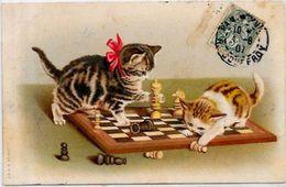 CPA échecs Chess Chat Cat Position Humaine Circulé - Schach