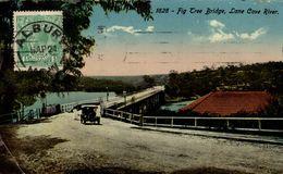 AUSTRALIE FIG TREE BRIDGE LANE COVE RIVER - Albury