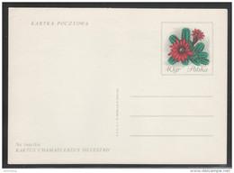 Polen, Postkarte Mit Kaktus Chamacereus / Poland, Postcard With Cactus Chamacereus - Sukkulenten