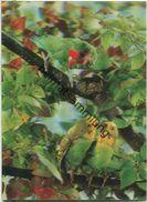 Les Perruches - Sittiche - Hologrammkarte - Visiorelief - Ansichtskarten