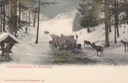 MÜRZSTEG - Hirschfütterung, 1900, Sehr Gute Erhaltung - Altri