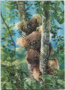 Koalabären - Hologrammkarte - Visiorelief - Ansichtskarten