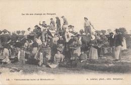 CARTE POSTALE LA VIE AUX CHAMPS / MONBAZILLAC / VENDANGES - Agriculture