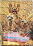 Hunde - Hologramm Karte - Visiorelief - Ansichtskarten