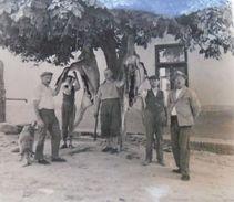 D152378 Hungary Hunting Jagd Chasse - Lot Of Photos - Hungary  Ca 1930's PÉCS - Mecsek ? Somsich Andor - Photos