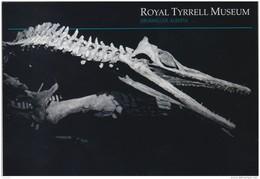 Royal Tyrrell Museum At Drumheller, Alberta, Trinacromerum (*) (PC255) - Musées