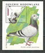 POLAND MNH ** Bloc 136 PIGEON. PIGEONS, COLOMBOPHILE, COLOMBOPHILIE Oiseau Bird - Blocks & Kleinbögen