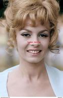 Reproduction D'une Photographie D'un Portrait De Michèle Mercier Coiffée D'un Chignon Et Crolles - Reproductions