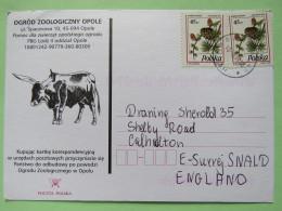 Poland 1998 Postcard Zoo Opole Bull To England - Pinecones Larix - 1944-.... Republic