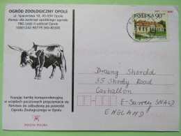 Poland 1998 Postcard Zoo Opole Bull - Rzeszor To England - Country Estates Oborach - 1944-.... Republic